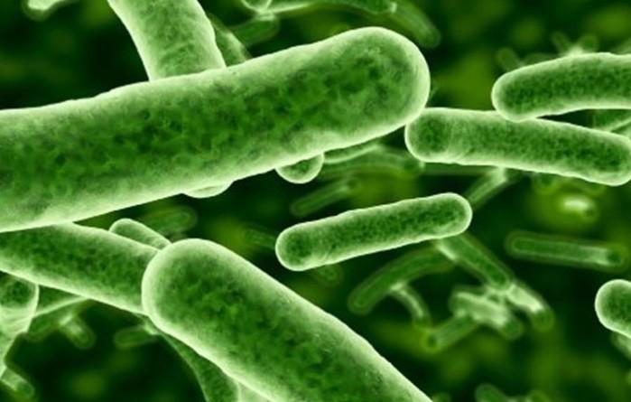 flora bacteriana utero y embarazo