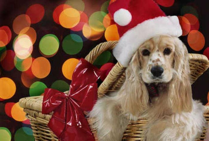 mascotas como regalos