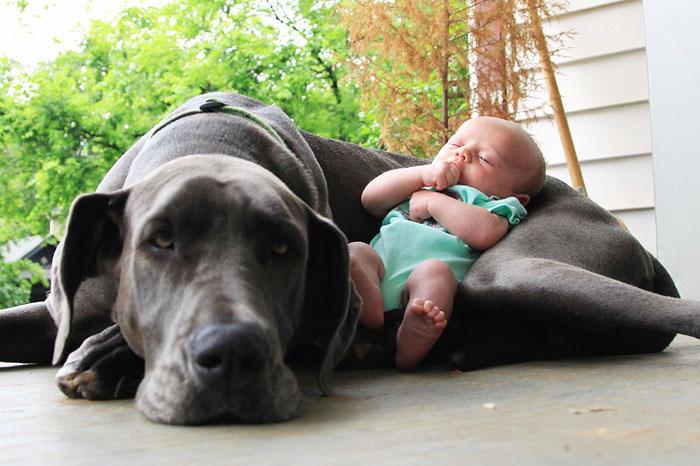 bebé con perro