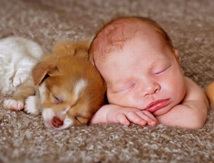 Menos kilos y alergias para los bebés que conviven con perros