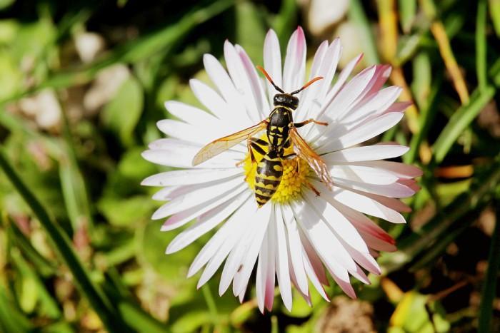 Cómo actuar frente a una picadura de estos insectos