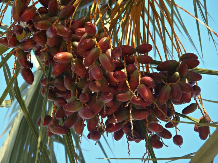 Una fruta con grandes beneficios