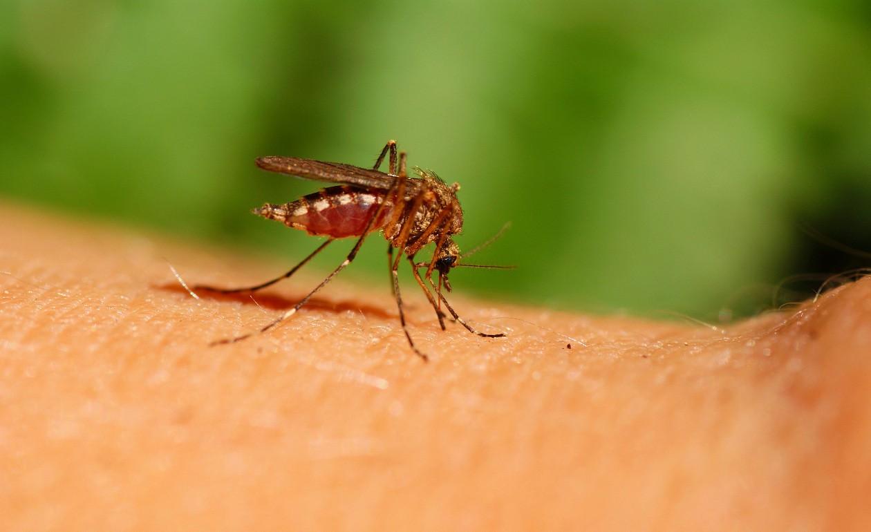 mosquitos picando