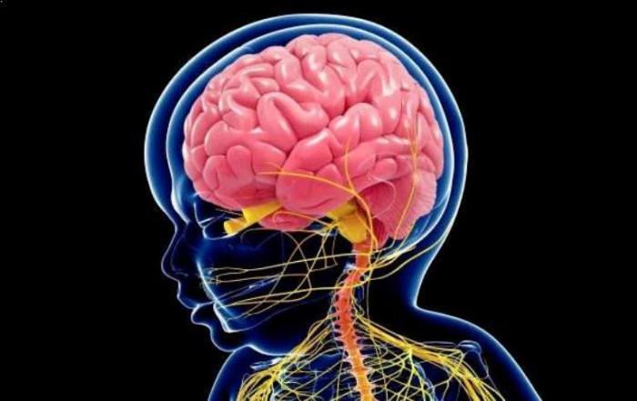 cerebro del bebé