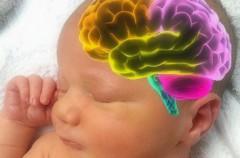 Evejecimiento acelerado en el cerebro de los bebés prematuros
