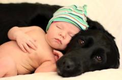 Prepara a tu perro para la llegada del bebé