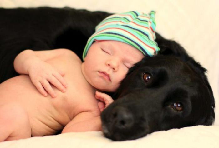 el perro y el bebé