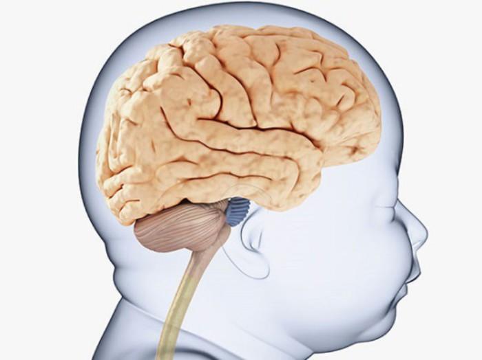 Sulfato de magnesio y cerebro del bebé