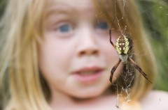El miedo a las arañas y las serpientes es innato