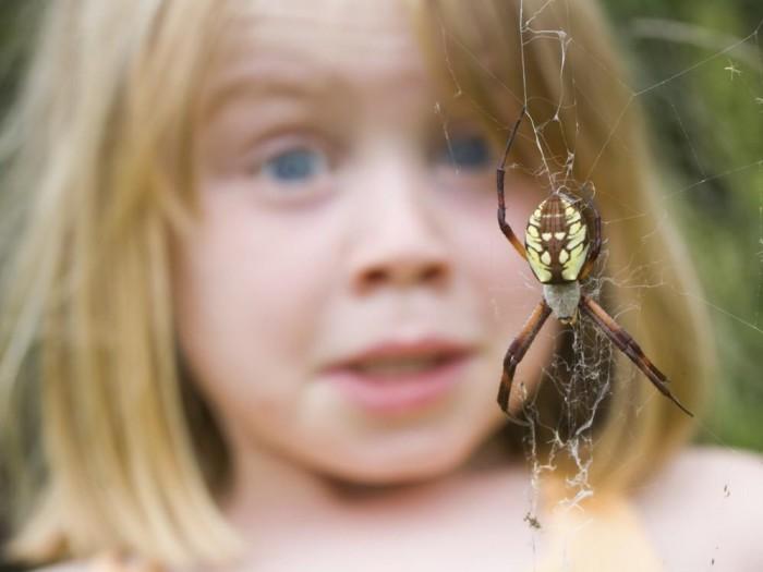 Miedo a las arañas y serpientes